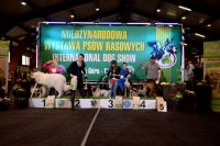 Best of Polish Breeds